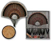 Turkey Tail and Beard Panels
