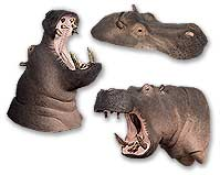 Hippopotamus Reproductions