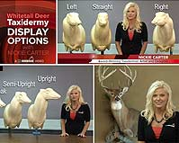 Deer Taxidermy Display Options